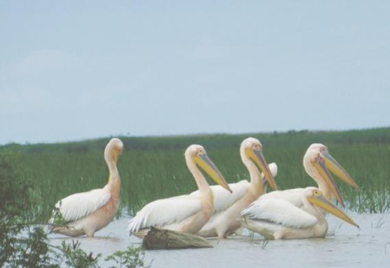 »Das Donaudelta – ein faszinierendes Ökosystem«
