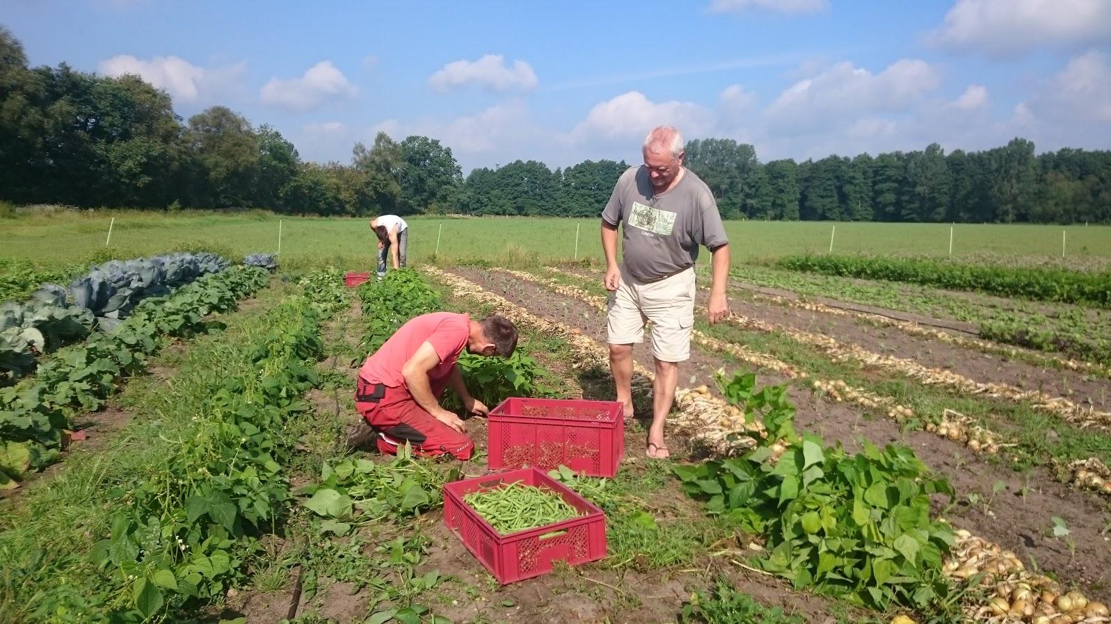 Solidarische Landwirtschft